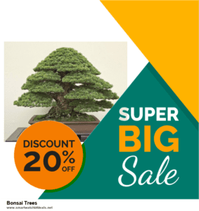 9 Best Bonsai Trees Black Friday 2020 and Cyber Monday Deals Sales